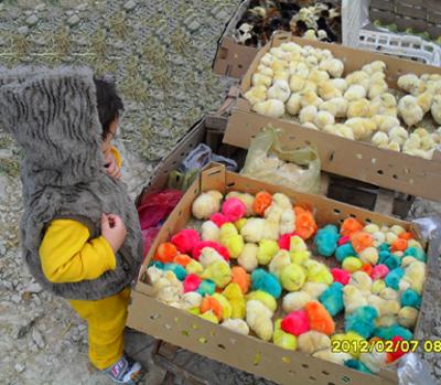 http://artin1389.persiangig.com/artin91jooje.jpg